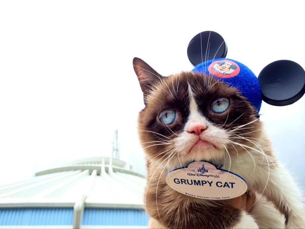 1366852109-Grumpy-Cat-Disney-World-Name-Tag.jpg