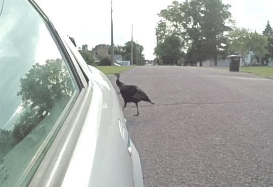 Capture - Wild Turkey Sebring.PNG