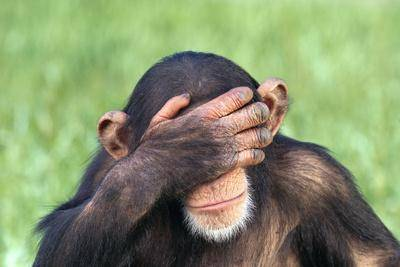 dlillc-chimpanzee-covering-eyes-with-hand_u-L-PZRXAD0.jpg