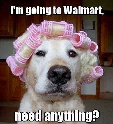 dog in curlers.jpg