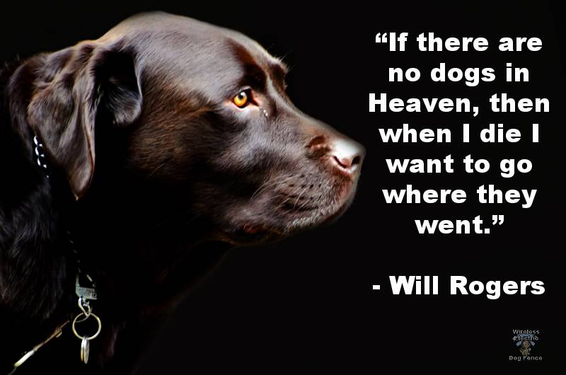 dog-quotes-dogs-in-heaven.jpg