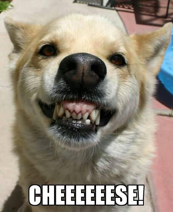 Dog Smile.jpg