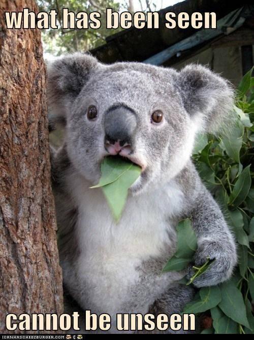 Koala-meme.jpg