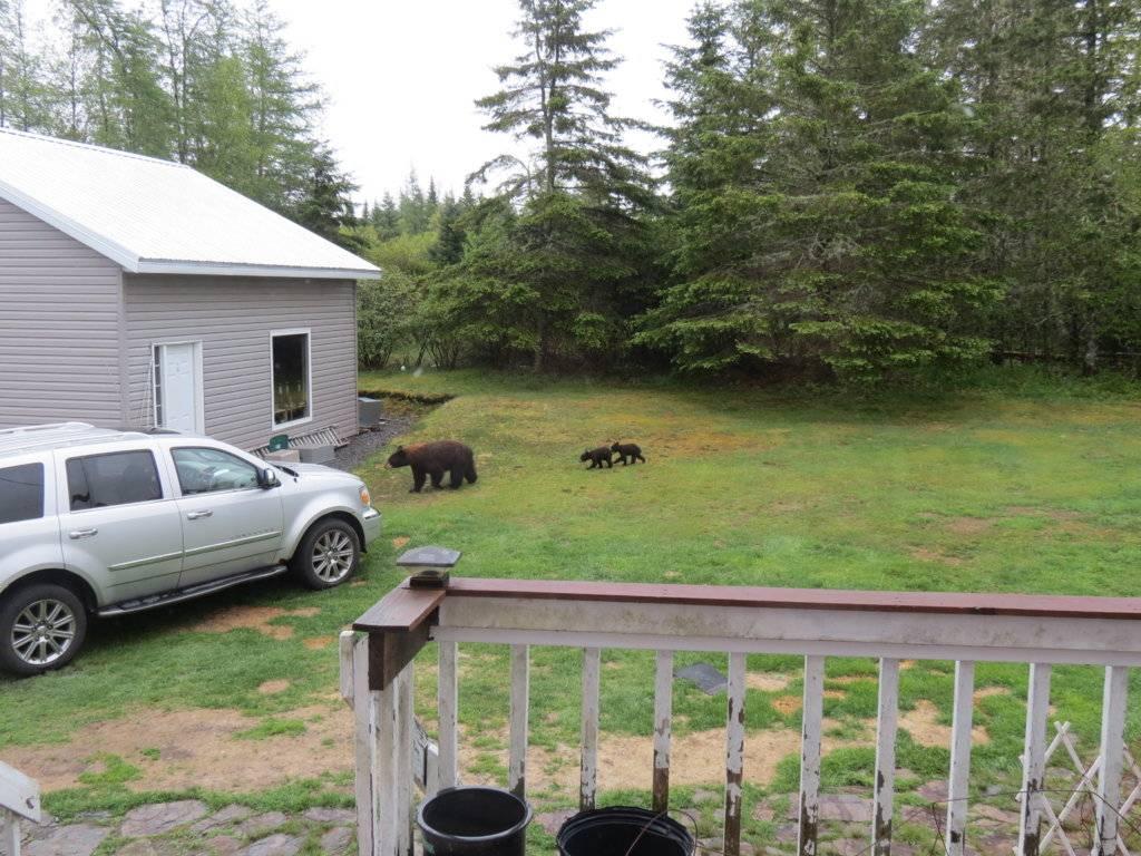tires and bears 022.JPG